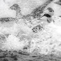 Lofoten-foto Tommy Andreassen-5