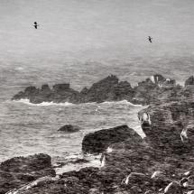 Lofoten-foto Tommy Andreassen-8151