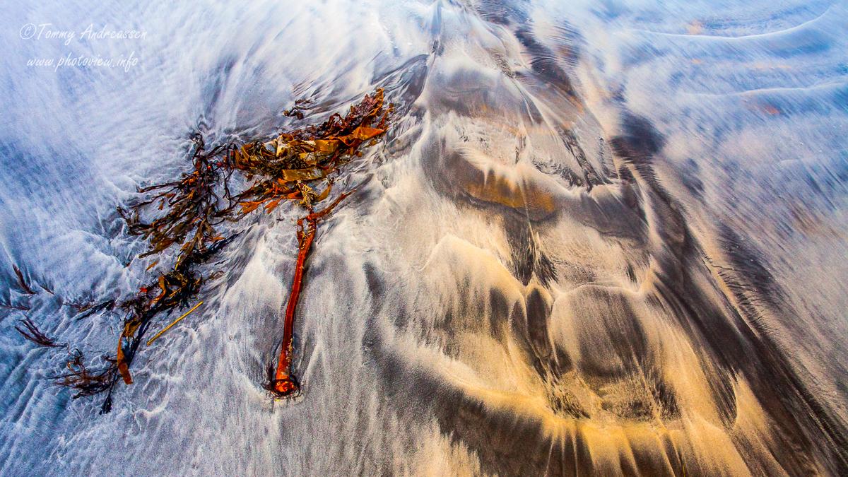Lofoten-foto Tommy Andreassen-8451