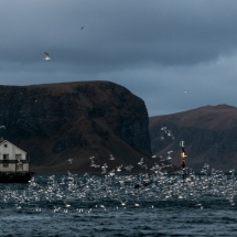 Røst © Tommy Andreassen-0637