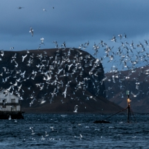 Røst © Tommy Andreassen-0650
