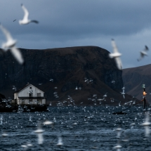 Røst © Tommy Andreassen-0701