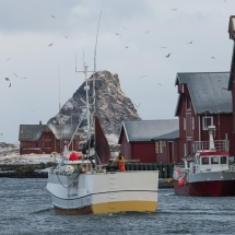 Røst © Tommy Andreassen-5826