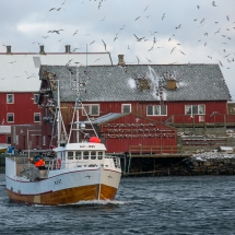 Røst © Tommy Andreassen-5877
