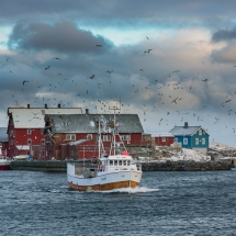 Røst © Tommy Andreassen-5887