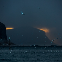 Røst © Tommy Andreassen-6749