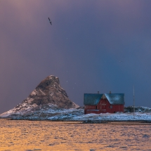 Røst © Tommy Andreassen-7155