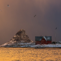 Røst © Tommy Andreassen-7163
