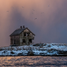 Røst © Tommy Andreassen-7296