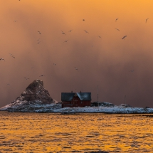 Røst © Tommy Andreassen-7349