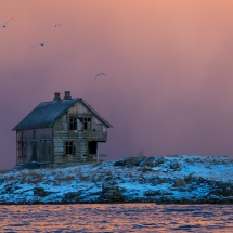Røst © Tommy Andreassen-7397
