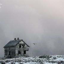 Røst © Tommy Andreassen-7430